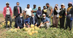 Hasat Yapan Çiftçilere Ziyaret