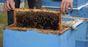 Arılarda Sonbahar Bakımı İçin Ne Yapmalıyız?